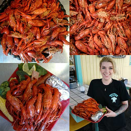 While supplies last--fresh cooked Louisiana Crawfish